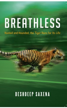 BREATHLESS: Hunted and Hounded, the Tiger Runs for Life